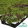 LiveRoof Green Roofs