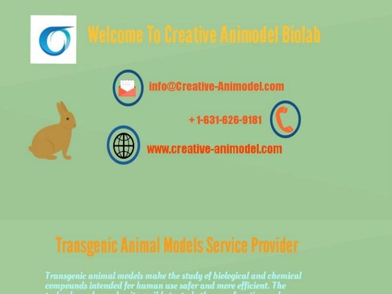 Creative Animal Animal Model Creative
