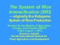 0327 The System of Rice Intensification (SRI)