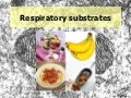03 Respiratory Substrates
