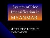 0403 System of Rice Intensification...