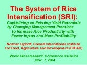 0409 The System of Rice Intensifica...