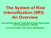 0425 The System of Rice Intensifica...