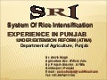 0720 System of Rice Intensification Experience in Punjab Under Extension Reform (ATMA)