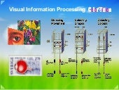 08d visual signal processing color ...