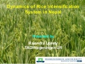 0914 Dynamics of Rice Intensificati...