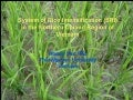 0931 System of Rice Intensification (SRI) in the Northern Upland Region of Vietnam