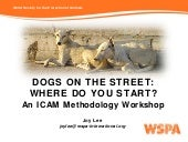 1.10 Dogs on the Street: Where Do You Start? - Joy Lee