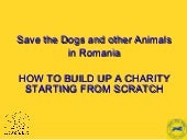 1.7 Save the Dogs and Other Animals in Romania: How to Build Up a Charity Starting from Scratch