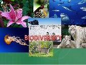 1 biologicaldiversity-091213082402-...