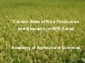 1027 Current State of Rice Production and Research in DPR Korea