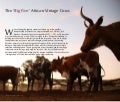 The 'big five' African vintage cows