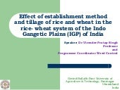 Effect of establishment method and ...