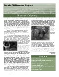 Summer 2006 Nevada Wilderness Project Newsletter