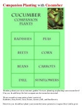 Companion Planting with Cucumber