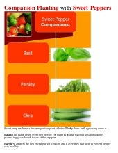 Companion Planting with Sweet Peppers