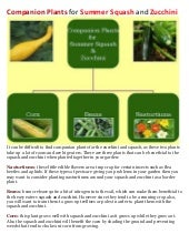 Companion Plants for Summer Squash ...