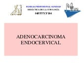 15. c endocervical