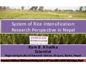 1501 -  System of Rice Intensification Research Perspective in Nepal