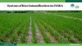 1503  - NABARD - System of Rice Intensification in India