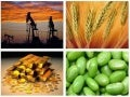 Commodity Market -Analysis & Updates