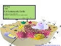 IB Biology Core 2.3: Eukaryotic Cells
