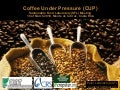 P. Laderach. Coffee Under Pressure Cup Ciat Sfl Meeting