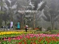 20100204 Tulips In The Mist (Taiwan) 霧中的桃源仙谷