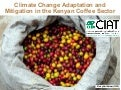 A Eitzinger - Climate Change Adaptation and Mitigation in the Kenyan Coffee Sector