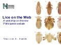 Lice on the Web: A workshop on the new Phthiraptera website