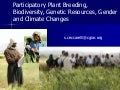 Participatory Plant Breeding, Biodiversity, Genetic Resources, Gender and Climate Changes