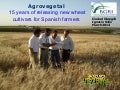 Agrovegetal 15 years of releasing new wheat cultivars for Spanish farmers