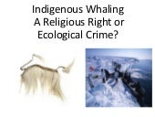 IndigenousWhaling A Religious Right...