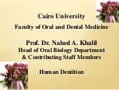 04. Premolars - Dentition