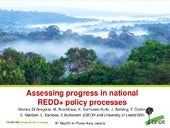 Assessing progress in national REDD+ policy processes