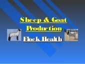 8. sheep goat production.flock health