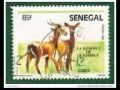 857 senegal-animals
