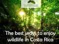 The best ways to enjoy wildlife in Costa Rica