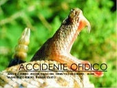 Accidente ofidico expooo