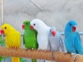 A Collection of Cute Birds