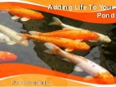 Adding Life To Your Pond- Pond Pump...