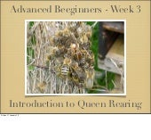 Advanced beeginners week3