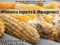 Aflatoxin impacts and management