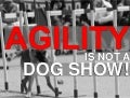 Agility is not a dog show