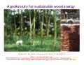 Agroforestry for sustainable wood energy