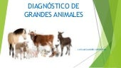 Dx veterinario
