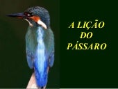 A Licao Do Passaro