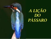 A licao do_passaro