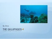 Alices p3the galapagos