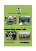 American  cattle  exporting  by  turkont